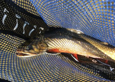 maine-brook-trout